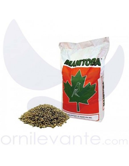 Mixtura Canarios T3 Platino 1kg (Manitoba)