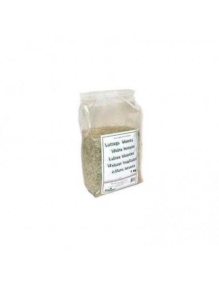 Semilla de Lechuga Blanca Extra 1KG (Manitoba)