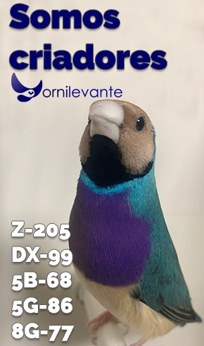 https://www.ornilevante.com/modules/iqithtmlandbanners/uploads/images/6055c09f3b745.jpg